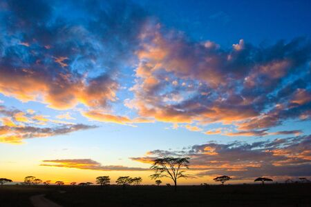 Sunset in the serengeti with beautiful colors Stock Photo