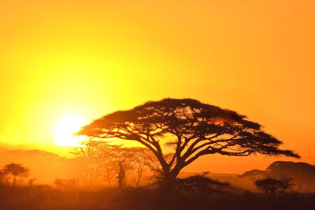 savanna: Sunset in the serengeti with beautiful colors Stock Photo