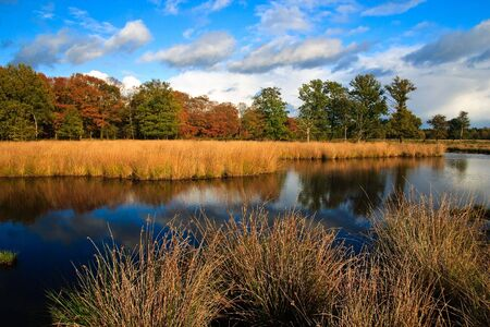 Colorful autumn leaves on trees in the wetlands Stock Photo