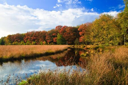 Colorful autumn leaves on trees in the wetlands photo