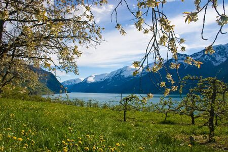 Fjord with apple trees in bloom in spring time Stock Photo