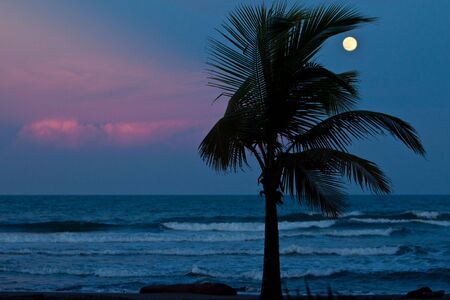 Beautiful sunset on the beach with palm tree photo