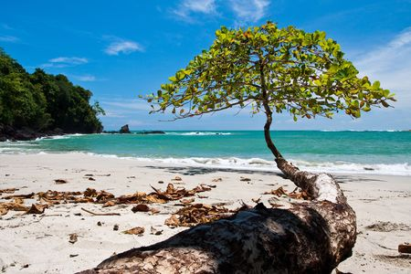 Tree growing towards the sea on the beach Stock Photo