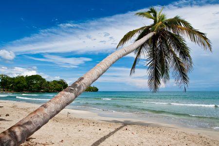 Palm trees on the beach near the sea with blue sky