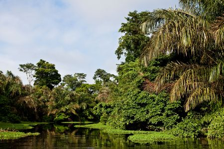 A river and beautiful trees in a rainforest 写真素材