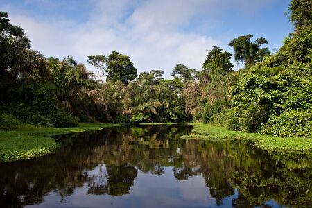 A river and beautiful trees in a rainforest Standard-Bild