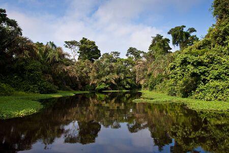 rio amazonas: Un r�o y bellos �rboles en una selva tropical