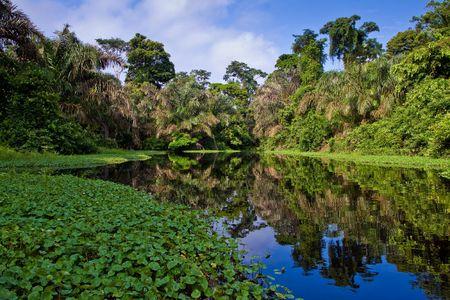 川や美しい木、熱帯雨林で