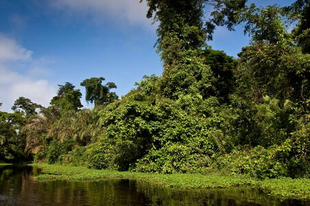 A river and beautiful trees in a rainforest Stock Photo