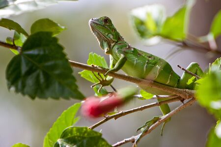 Small lizard sitting on a branch in a tree photo