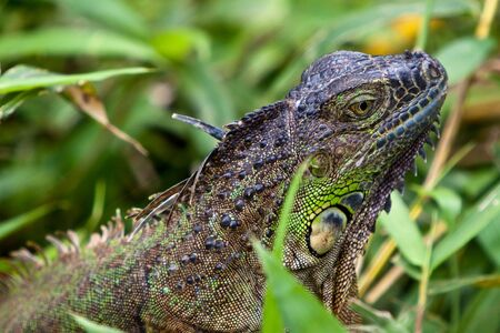 Green lizard sitting in the high grass photo