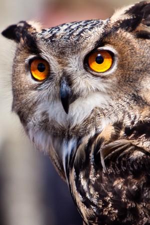 Big eagle owl bird head in closeup Stock Photo