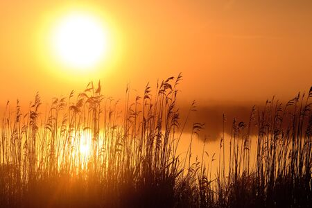 Colourful sunrise with morning dew at a lake