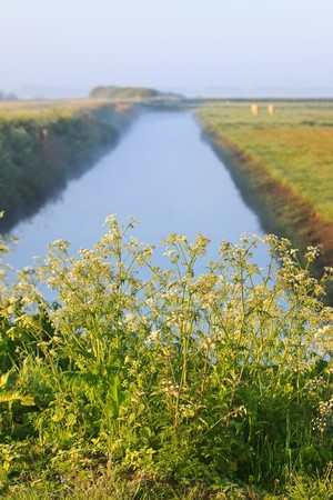 Sunrise with morning dew and weed near a ditch Stock Photo - 7845794