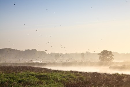 Moring landscape with lots of birds at a lake photo