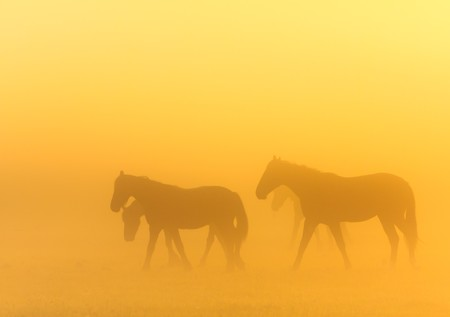 Morning mist with horses in a farmland photo
