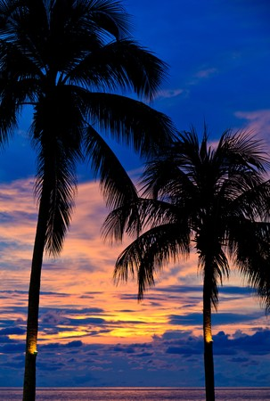Beautiful sunset with palm trees at the beach photo