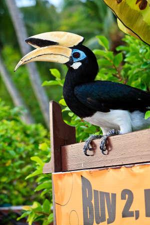 palawan: Aves de c�lao de Palawan en cerrar en Malasia