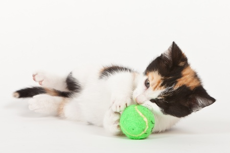 Young cat playing with ball isolated on white photo