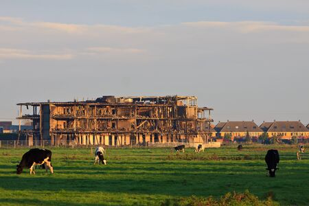 burned out: Building burned out by fire with cows grazing in grassland