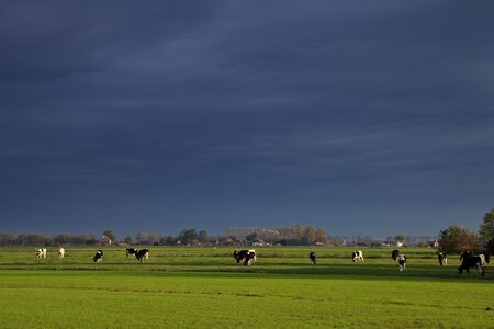 Landscape with grassland and cows on a rainy day Stock Photo - 10482526