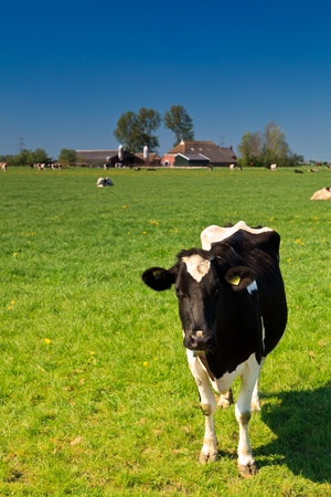Countryside with grassland, cows and farm Stock Photo - 10558285