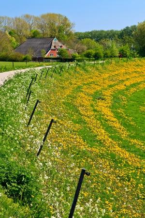 grass verge: Grassland con le aziende agricole in campagna in una giornata di sole