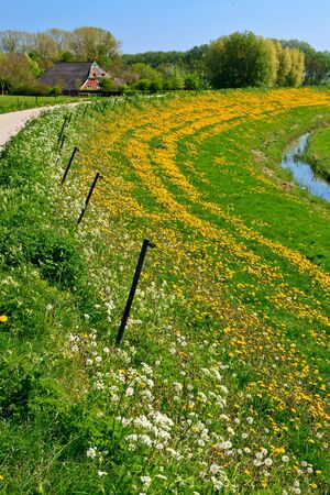 grass verge: Grassland with farms in the countryside on a sunny day