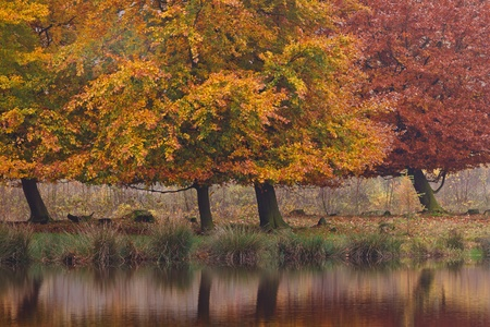 Autumn birch trees in a colorful landscape with water photo