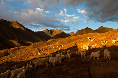 Mountain valley with goats lit by evening sun photo
