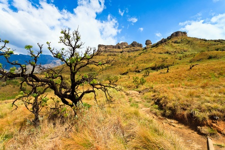 desolate: Tree in a mountain landscape  on a sunny day