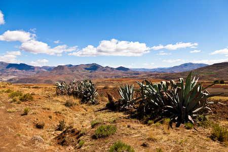 desolate: Cactusus in a desolate mountain landscape in Africa Stock Photo