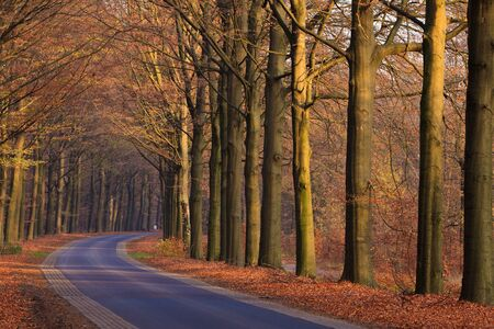 Road with trees on a sunny day in autumn photo