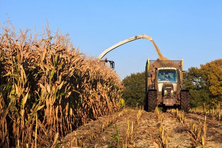 Harvesting wheat on the field with a combine Stock Photo - 13290924
