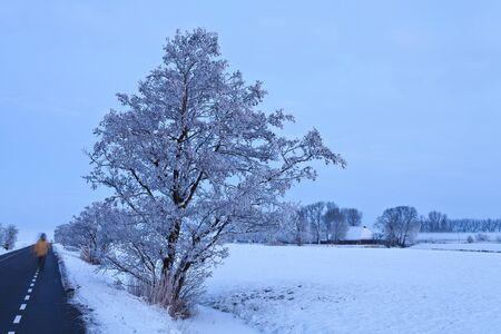 Tree in a cold white winter landscape Stock Photo - 13333803