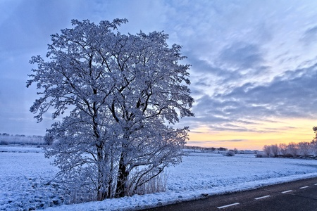 Tree in a cold white winter landscape photo