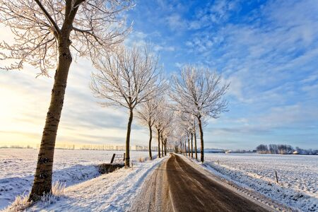 Road with trees in a cold white winter landscape photo