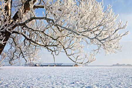 Tree and farm in a cold white winter landscape photo