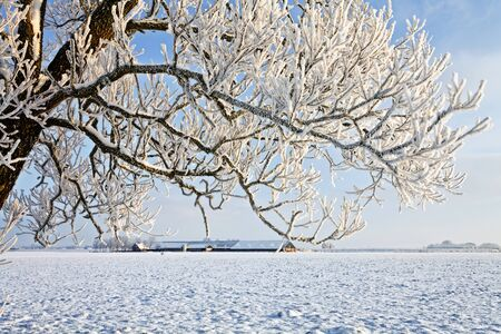 hoar: Tree and farm in a cold white winter landscape