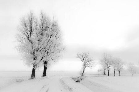 A white cold winter landscape with trees