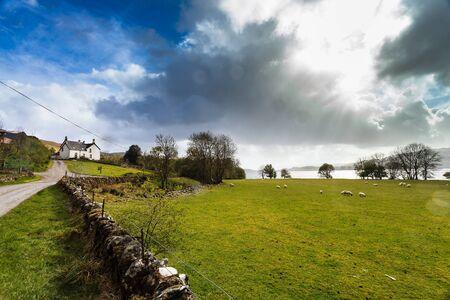 wheater: Farm animals in a grassland near a lake with dark clouds Stock Photo