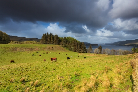 Farm animals in a grassland near a lake with dark clouds Stock Photo - 15066665