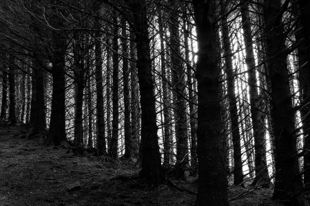 Tree trunks in a dark cold forest photo