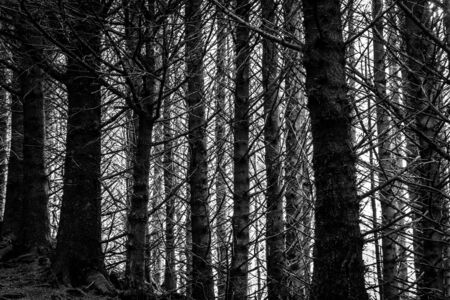 Tree trunks in a dark cold forest