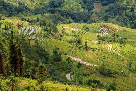 Green rice terrace valley landscape of rice tarraces in\ China