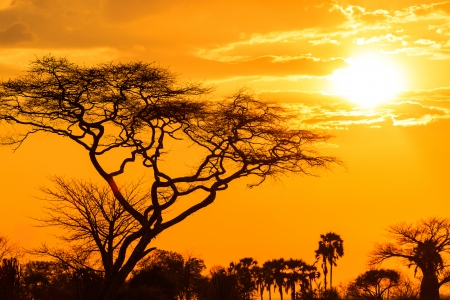 Orange glow of an african sunset with tree in front photo