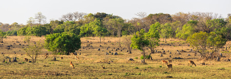 Wildlife grazing on the plains of Africa in early morning light photo
