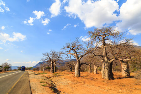 hiway: Road through the baobab forest valley in Tanzania on sunny day