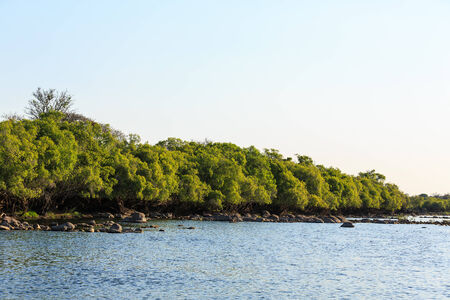 riverside trees: Green trees along the riverside in summer time Stock Photo