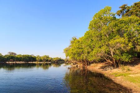 riverside trees: Trees in morning light on the riverside in Africa Stock Photo